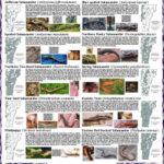 poster_salamander250