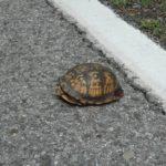 T-carolina on road, Virginia, June 2016, Chris Slesar