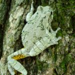 H-versicolor on tree Molly Kennedy