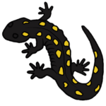 Yellow-Spotted-sq