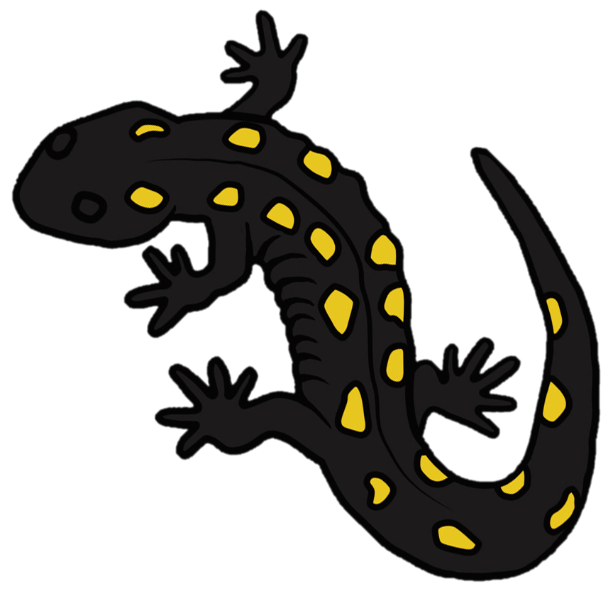 Spotted salamander icon