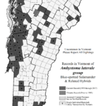 Records in Vermont of Ambystoma laterale group (Blue-spotted Salamander and related hybrids)