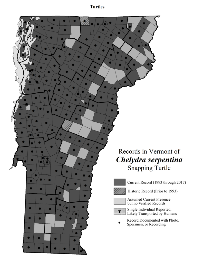 Records in Vermont of Chelydra serpentina (Snapping Turtle)