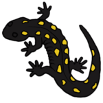 cropped-Yellow-Spotted-sq.png