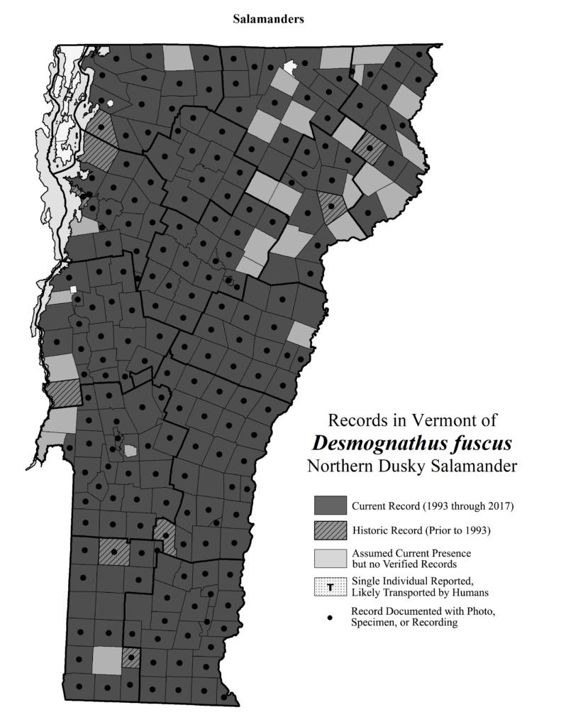 Records in Vermont of Desmognathus fuscus (Northern Dusky Salamander)
