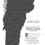 Records in Vermont of Glyptemys insculpta (Wood Turtle)