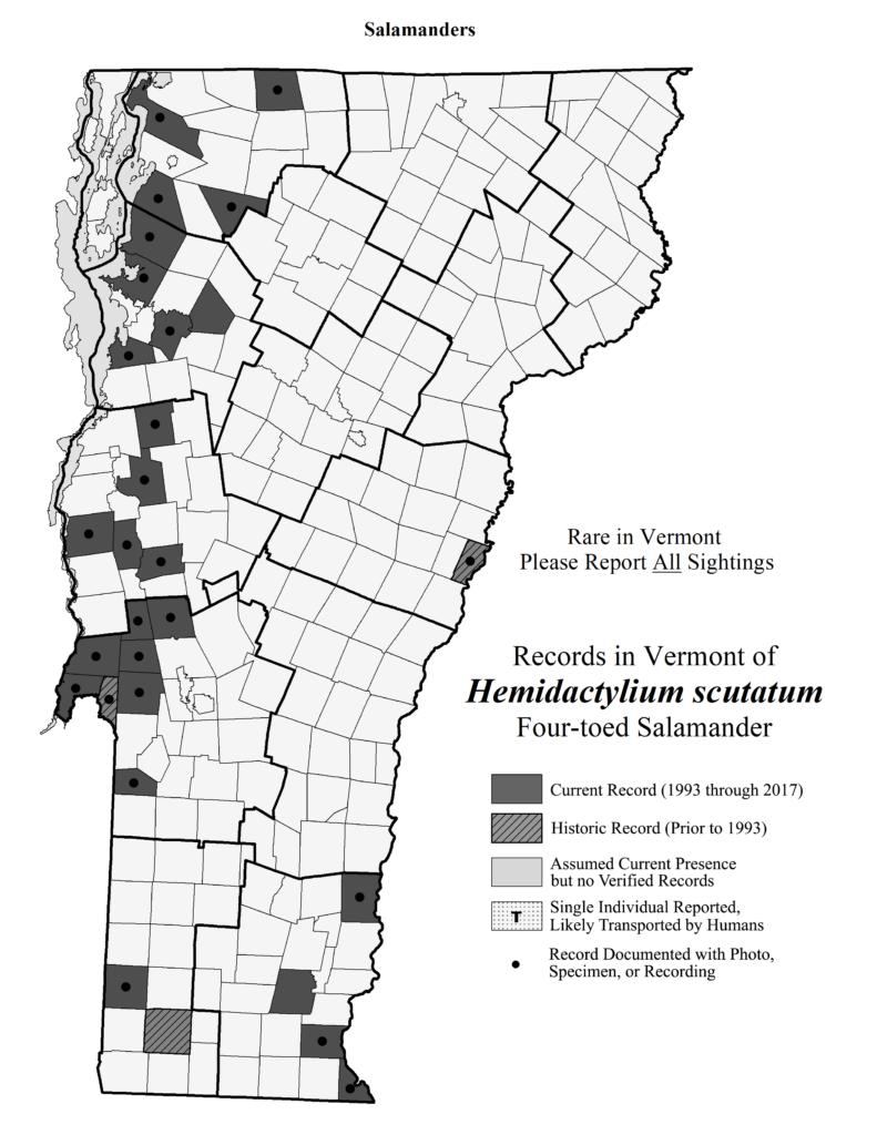 Records in Vermont of Hemidactylium scutatum (Four-toed Salamander)