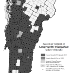 Records in Vermont of Lampropeltis triangulum (Eastern Milksnake)
