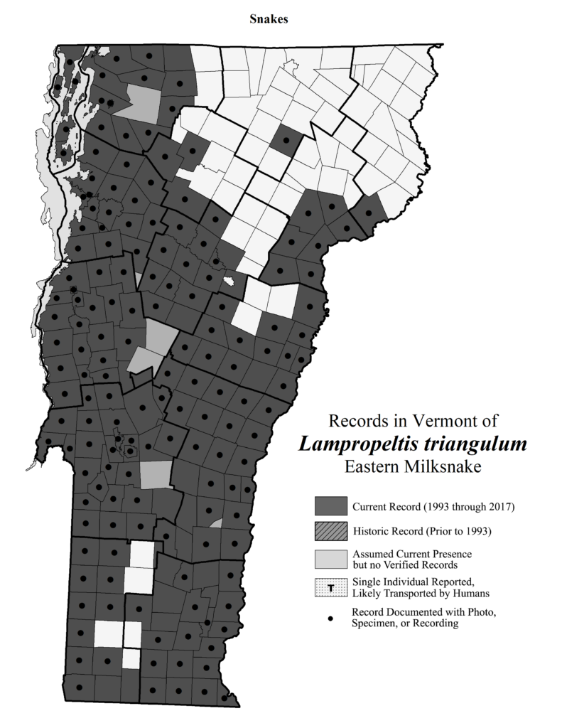 Records in Vermont of Lampropeltis triangulum (Eastern Milksnake)