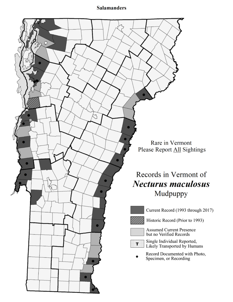 Records in Vermont of Necturus maculosus (Mudpuppy)