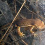 newt eating jeff eggs kvbriggs (2)