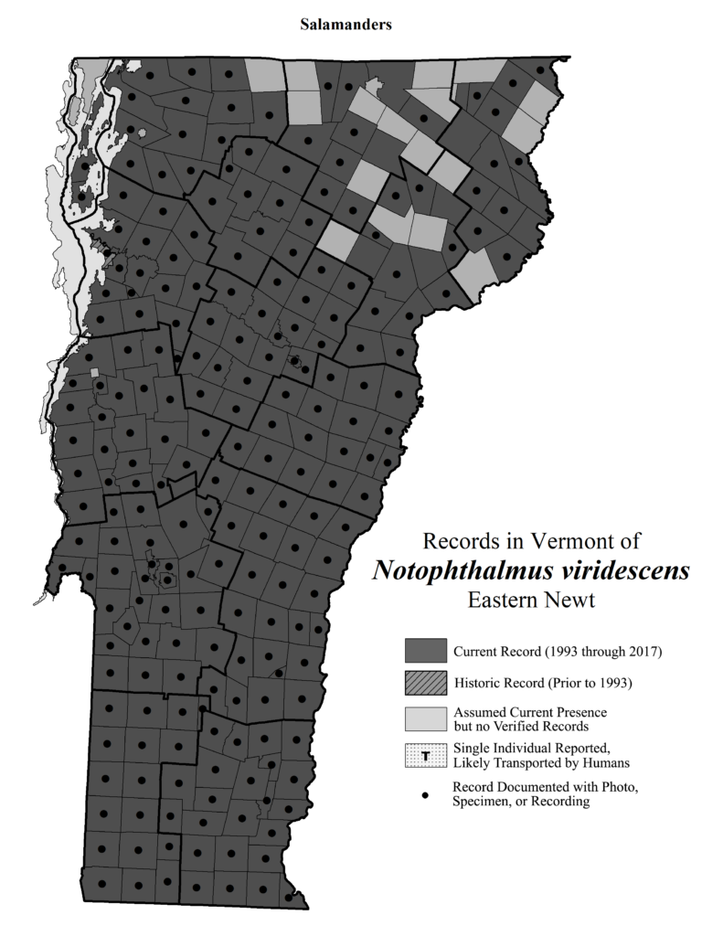 Records in Vermont of Notophthalmus viridescens (Eastern Newt)