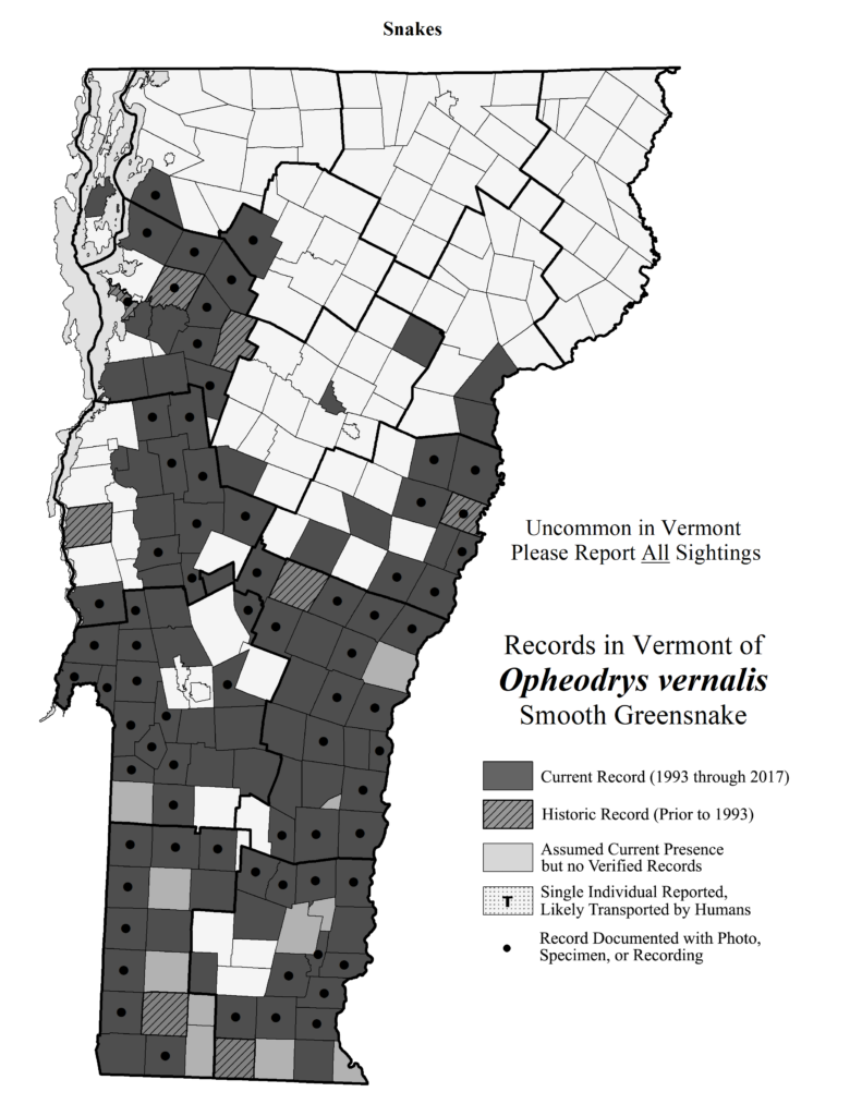 Records in Vermont of Opheodrys ernalis (Smooth Greensnake)