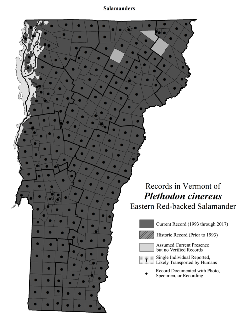 Records in Vermont of Plethodon cinerus (Eastern Red-backed Salamander)