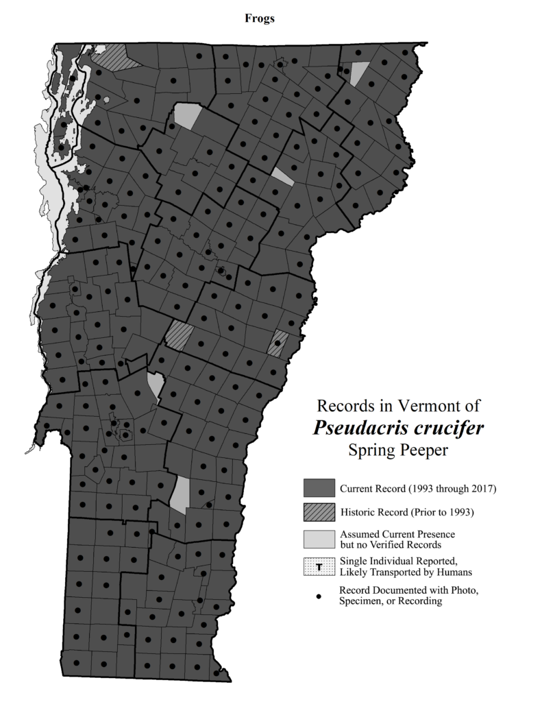 Records in Vermont of Pseudacris crucifer (Spring Peeper)