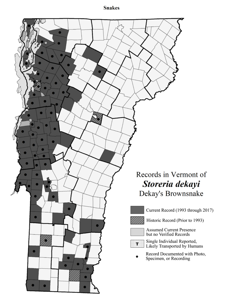 Records in Vermont of Storeria dekayi (Dekay's Brownsnake)
