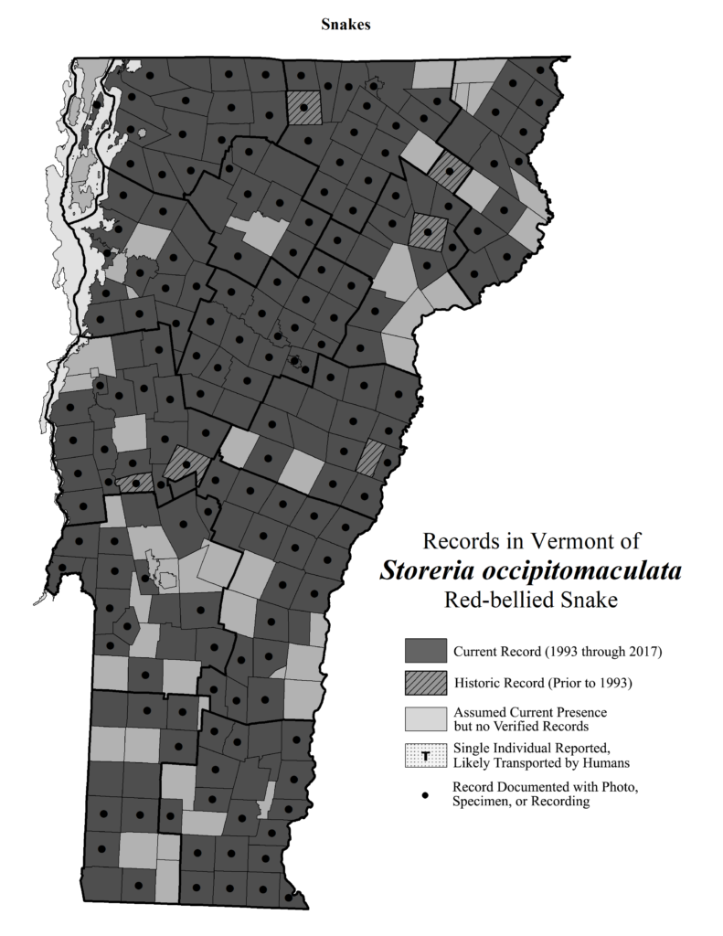 Records in Vermont of Storeria occipitomaculata (Red-bellied Snake)