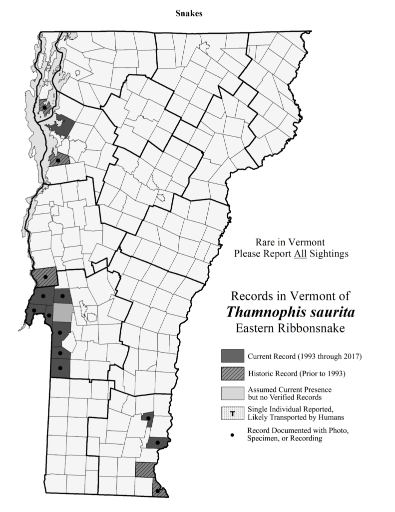 Records in Vermont of Thamnophis saurita (Eastern Ribbonsnake)